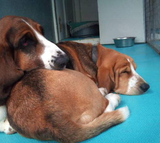 A sleepy Bertie & Gracie